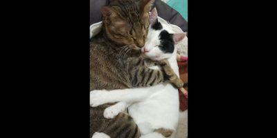 Tras su adopción en 2015, los tres felinos se han adaptado a su nuevo hogar. Foto:Facebook Three Blind Cats