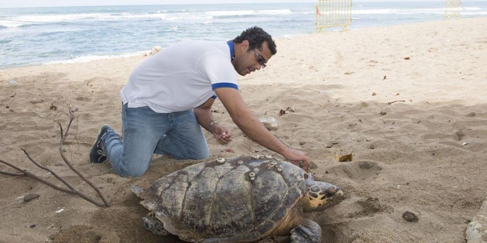 La tortuga marina depositó 89 huevos. Foto:Fuente externa