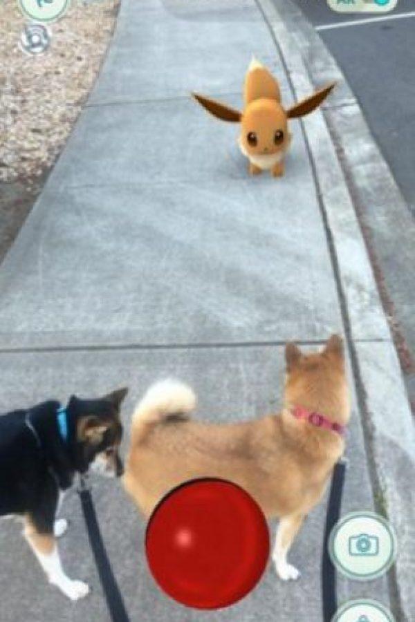 Frente a máscotas. Foto:Nintendo