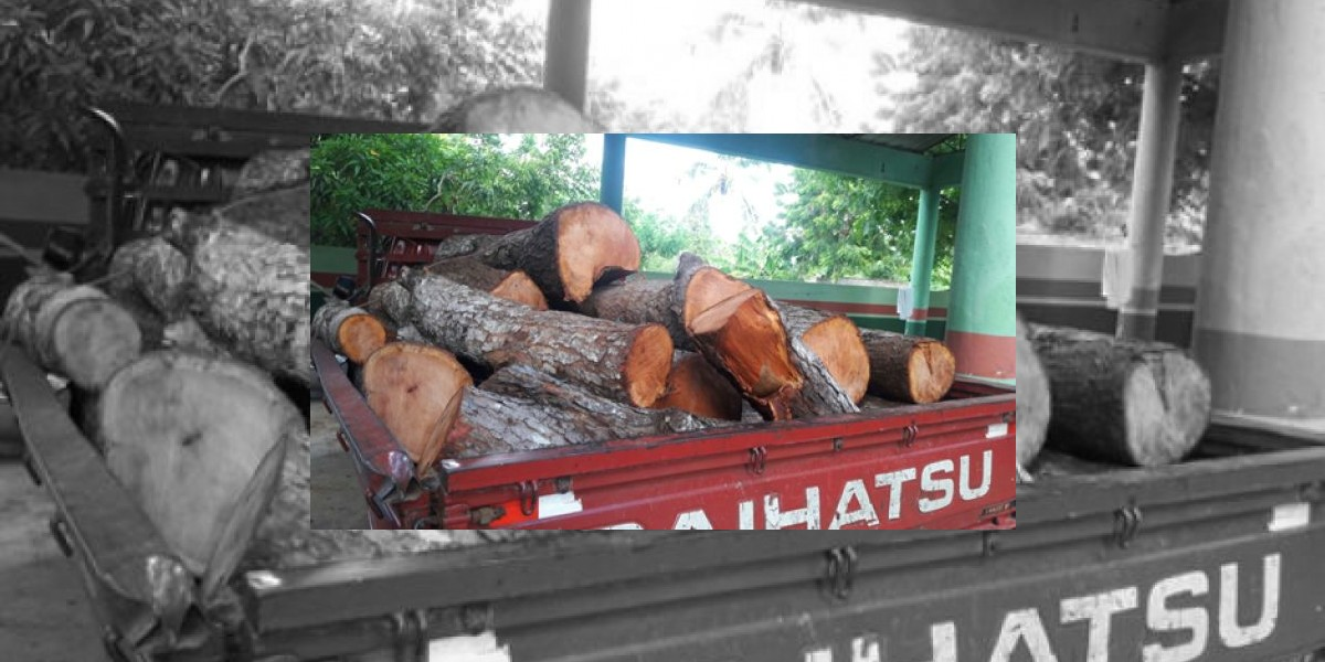 Medio Ambiente apresa hombre por cortar árboles de madera preciosa