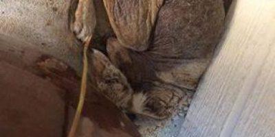 Mujer rescata a perro enfermo que resultó ser otro animal