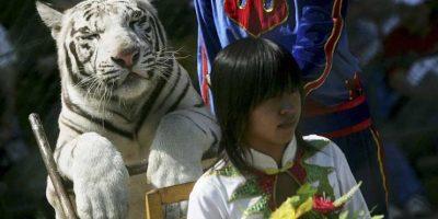 La tragedia ocurrió en el Badaling Safari World, ubicado cerca de Pekín. Foto:Getty Images