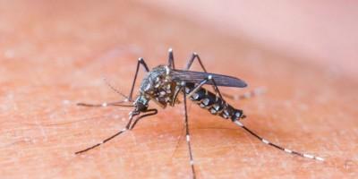 Lanzan guía de atención para  afectados por zika