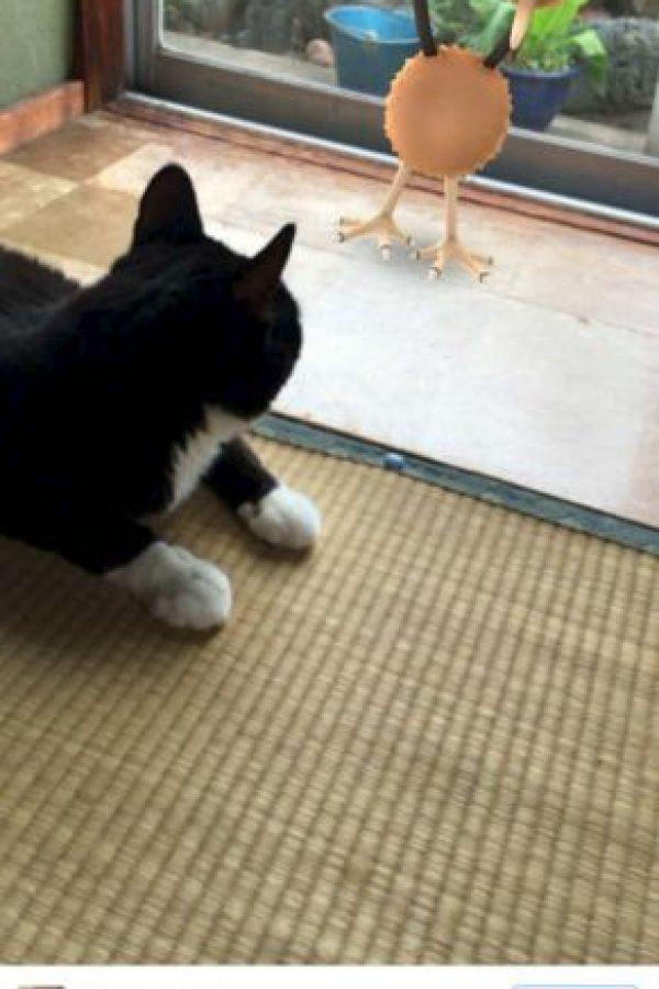 En Japón aseguran que las mascotas… Foto:Twitter
