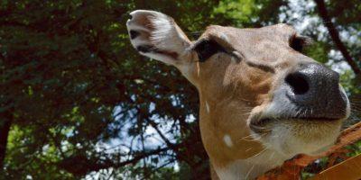 El zoológico debería tener menor cantidad de animales y más especies.  Foto:Mario de Peña