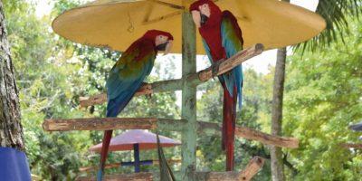 Algunas de las especies del zoodom están allí desde su fundación, en 1975.  Foto:Mario de Peña