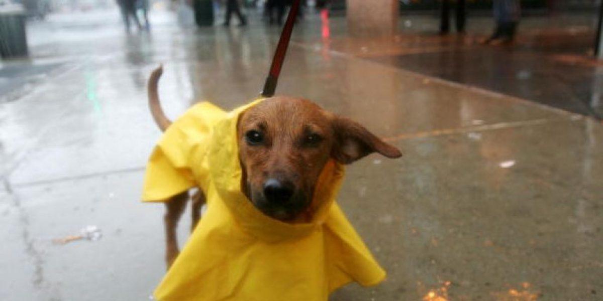 Envenenan a cientos de perros callejeros