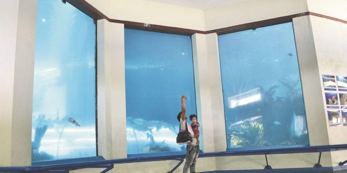 Visitantes del Acuario esperan más novedades
