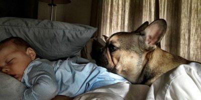 Miren las mejores imágenes del pequeño Boomer Foto:Instagram