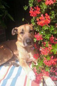 Reportan que está bien cuidado y es feliz Foto:Facebook: Mascotas Puerto Madero Adopciones Responsables