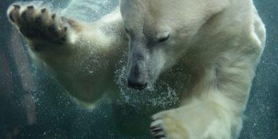 El impresionante encuentro de un niño con oso polar