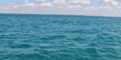 Esto porque se enfrían más rápido si nadan. Foto:LionsGate
