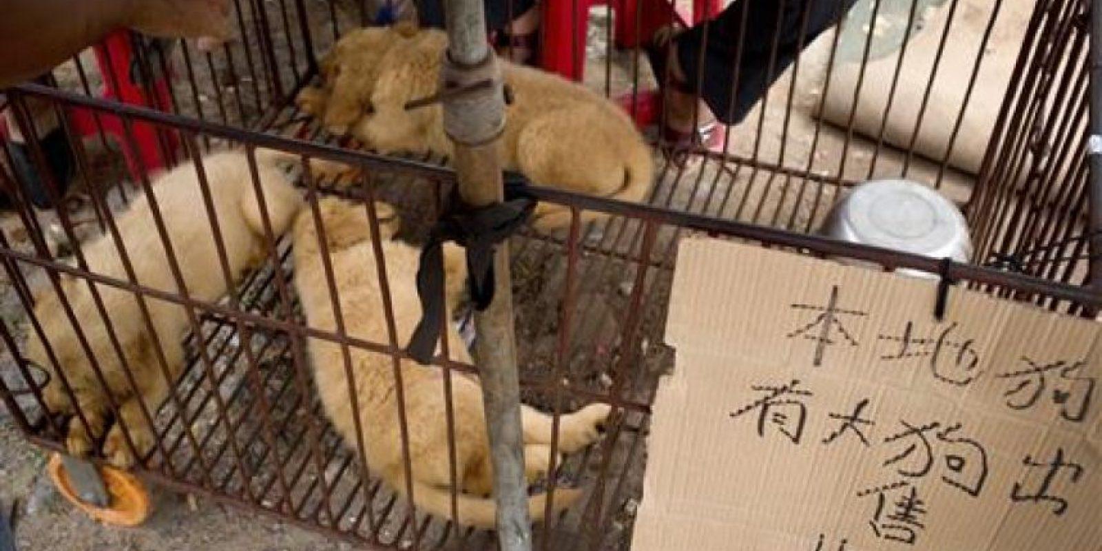 Esto recuerda al Festival de Carne de Yulin, en China, una de las tradiciones asiáticas más criticadas en el mundo Foto:AP