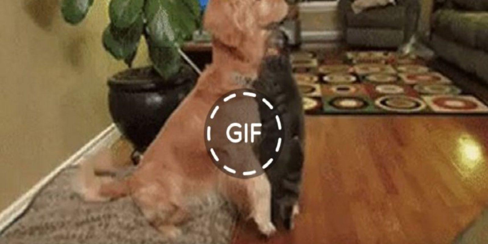 Los GIFs son muy populares hoy en día. Foto:Facebook