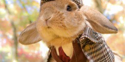 Conoce a Puipui, el conejito más elegante del mundo