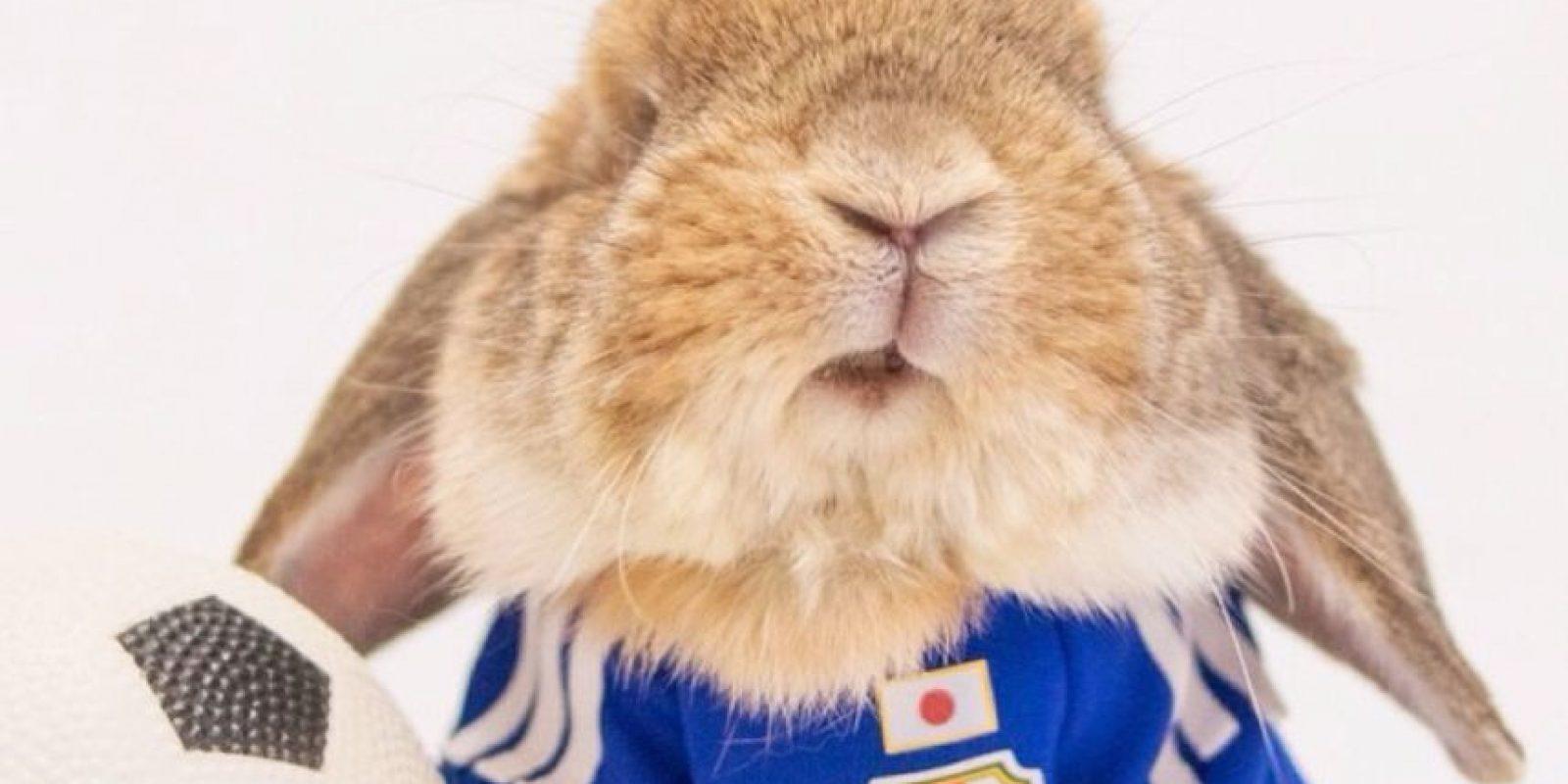 El conejo tiene 44 millones de seguidores en Instagram. Foto:Fuente Externa