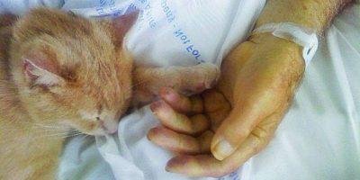 """Conozcan a """"Tom"""" el gato que ayuda a ancianos moribundos"""