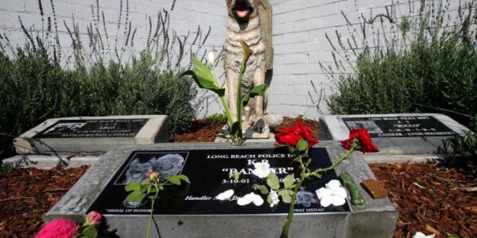 Pronto, se iniciaron en Londres y otras ciudades de Europa programas K-9 (K-9 es un homófono del inglés canine, que sería canino). Foto:Getty Images