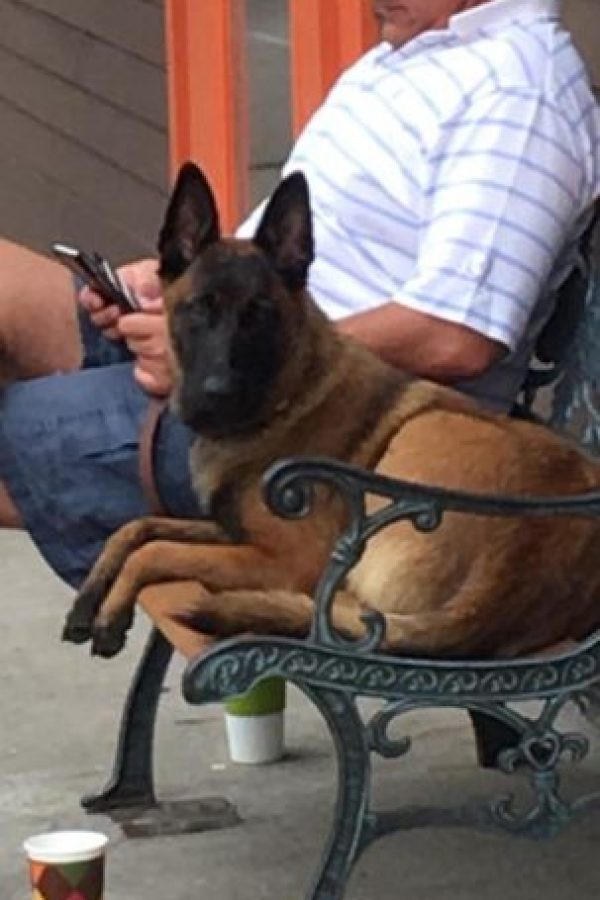 """""""Rylee"""", la perrita protagonista de la historia Foto:Facebook: Lost Dog Search Team"""