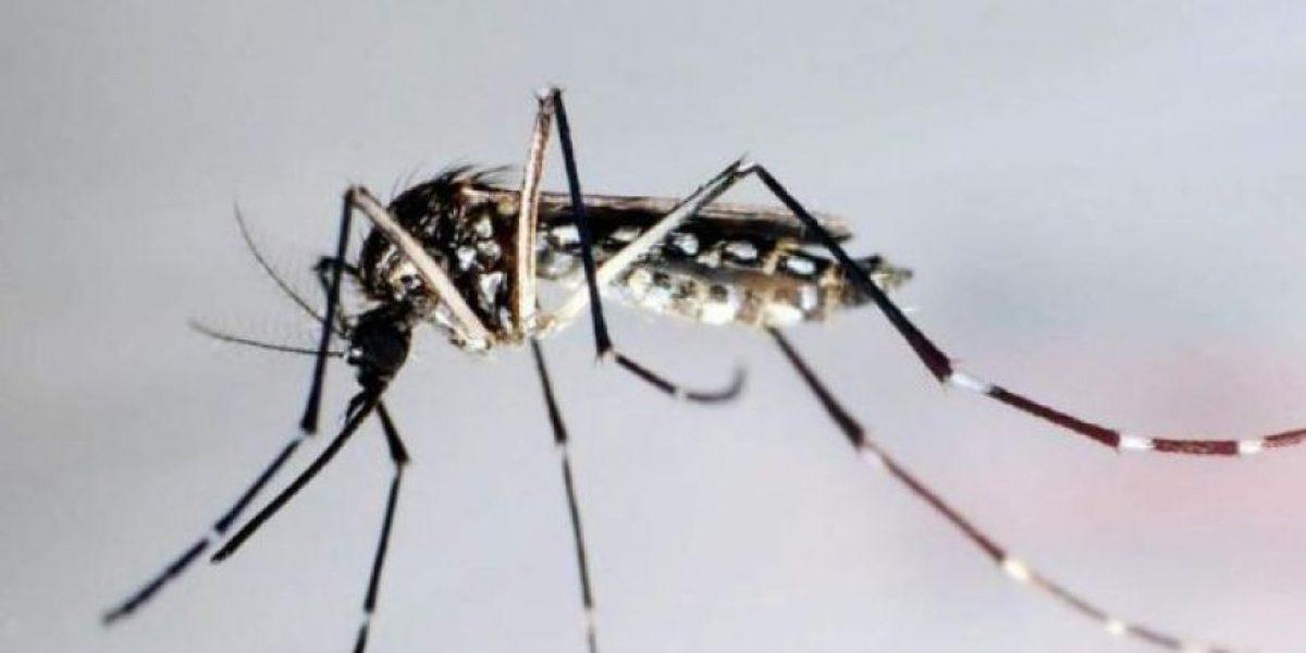 Al menos 30 personas han muerto a causa del dengue en lo que va de año