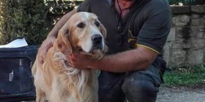 Perro sobrevivió 9 dias en las ruinas del terremoto de italia