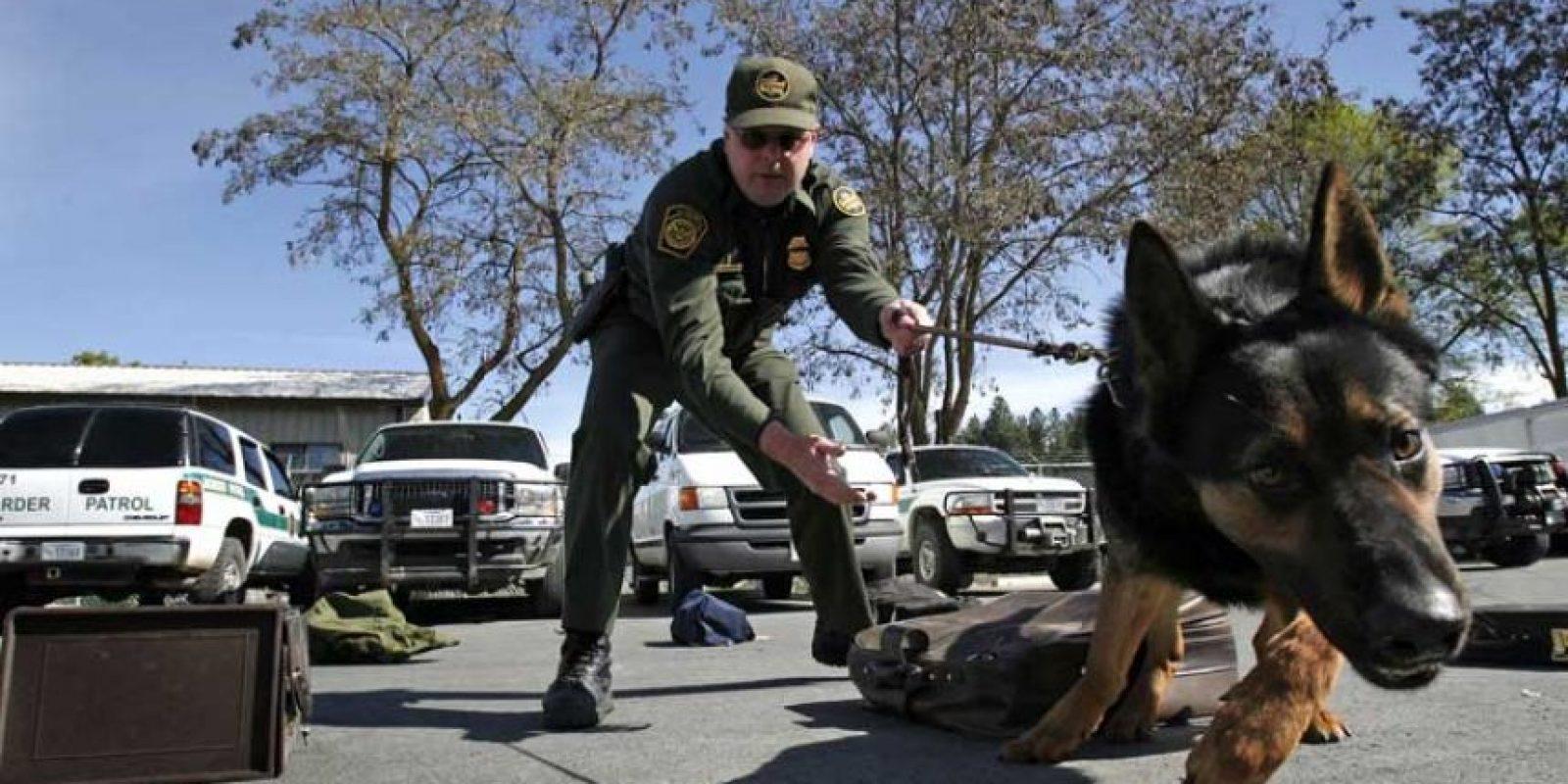 Las fuerzas de policía en las ciudades más importantes del mundo utilizan perros para rastrear criminales. Foto:Getty Images