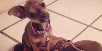 YouTube Foto:Su perrita se llama Mimi