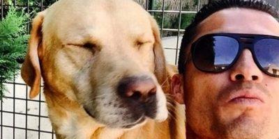"""Instagram Foto:Cristiano Ronaldo tiene tres perros: un labrador llamado """"Bobby Moore"""", una labrador de nombre """"Marosca"""" y una Yorkshire que llama """"Abilhinha""""."""