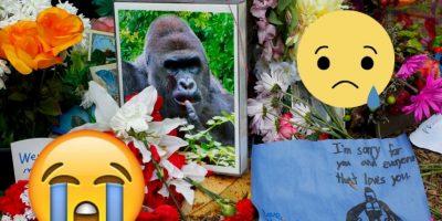 ¿Recuerdan a Harambe, el gorila asesinado? Volvió en forma de memes
