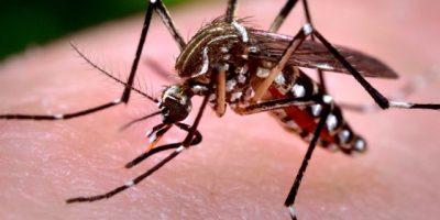 """Ministerio de Salud asegura que la epidemia del zika """"está llegando a su fin"""""""