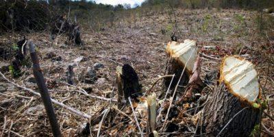 Prisión preventiva a dominicano y haitiano por violar Ley Medio Ambiente