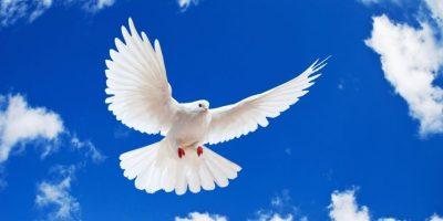 Infografía: 21 de septiembre; Día Internacional de la Paz