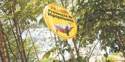 Cuidado: hipopótamos en la vía