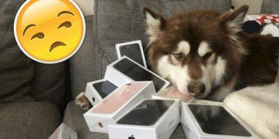 Este hombre decidió comprar 8 iPhone 7... para su perro
