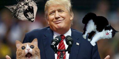 Este gato odia a Donald Trump y no duda en demostrarlo