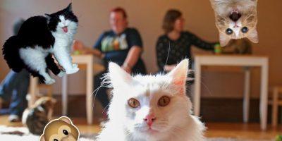 Con 31 años, él es gato más viejo del mundo y conquistó Internet