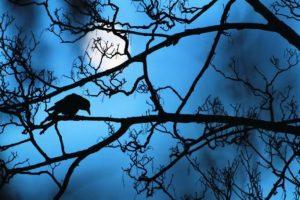 """2- Ganador del """"Young Gran"""". La luna y el cuervo. Al ver a un cuervo en el parque, Gideón pensó que las ramas delgadas del árbol """"le hicieron sentir algo casi sobrenatural que parece sacado de un cuento de hadas"""". Gideon Knight, RU Foto:MWN"""