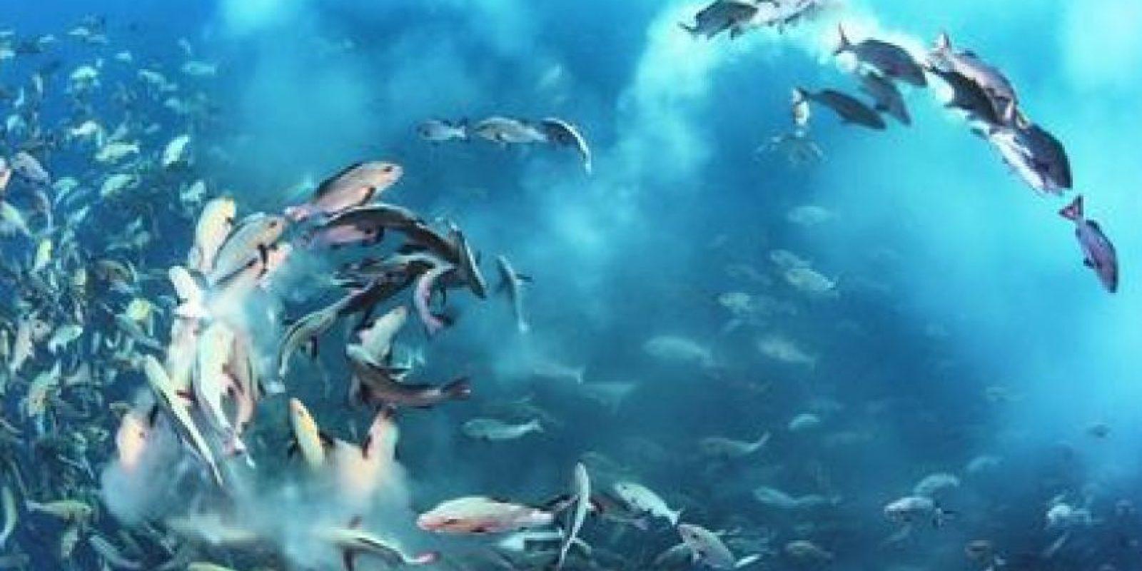 4- Bajo las aguas. Fiesta de pargos.Tony Wu capturó este arco dinámico de desove de peces en la oblicua luz de la mañana. Miles de pargos de dos manchas se reúnen para desovar cada mes alrededor de Palau. Tony wu, usa Foto:MWN