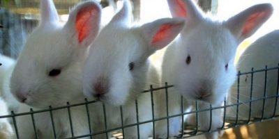 Incorporan la carne de conejo dentro del menú de tanda extendida