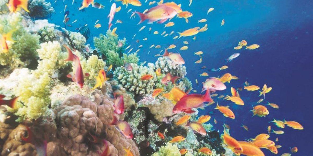 """Hoy bailamos y cantamos """"Al ritmo de los corales"""""""