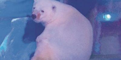 """Un millón de personas pide liberar al oso """"más triste del mundo"""""""