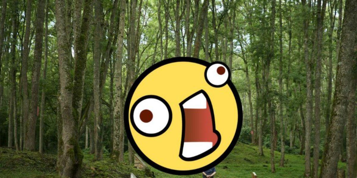 Fotos: Captan a perturbador hombre desnudo en el bosque