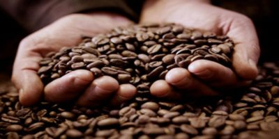 Declaran estado emergencia del sector café en Polo