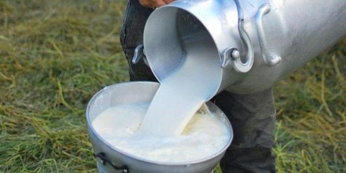 Advierten importación 300 millones de dólares de leche perjudica productores