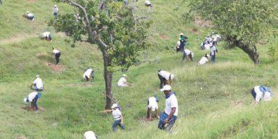 Empleados Popular y familias siembran unos 5,000 árboles