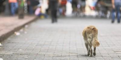 Harán jornada esterilización de perros y gatos callejeros