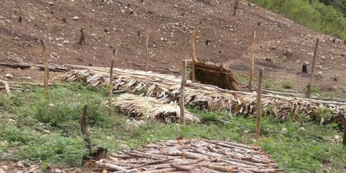 Intervienen Cordillera Septentrional para impedir tala de bosques