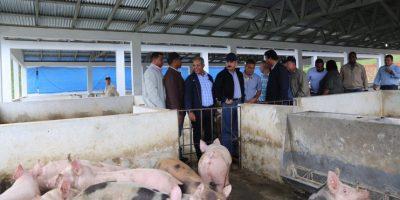 Medina hace visita sorpresa a criadores de cerdo de Bonao a quienes financió
