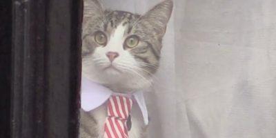Gatito embajador vigila a la prensa durante el interrogatorio de Assange