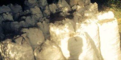 Medio Ambiente incauta 44 sacos de carbón en Santiago